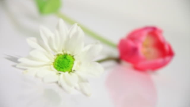 White Daisy and Pink Tulip