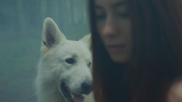 White dog and a girl