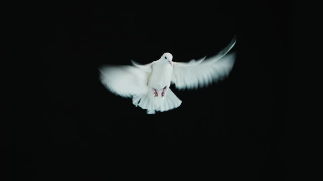 White Dove video