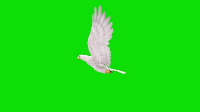 グリーンスクリーン上の白いワシの飛行アニメーション。動物、野生動物、ゲーム、学校に戻る、3dアニメーション、短いビデオ、フィルム、漫画、有機、クロマキー、キャラクターアニメ� - 鳥点の映像素材/bロール