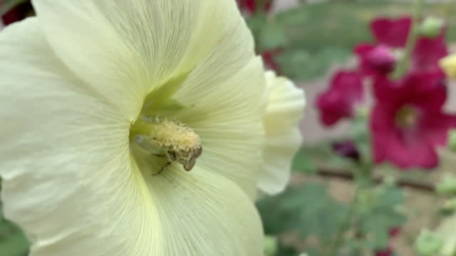 white flower video