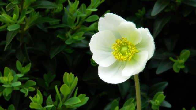stockvideo's en b-roll-footage met witte bloem met meeldraden duidelijk zichtbaar - fresh start yellow