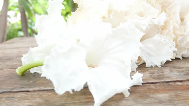 white flowers on wood table in nature.
