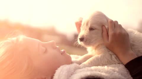 cucciolo di golden retriever bianco coccolarsi con la proprietaria sdraiata sul prato nel parco all'aperto estate spring day baciando abbracciare petting - carino video stock e b–roll