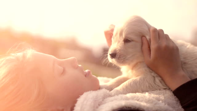 white golden retriever puppy cuddling up with owner girl laying on lawn in park outdoors summer spring day kissing hugging petting - cagnolino video stock e b–roll