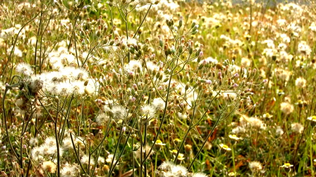 white grass flower in garden video