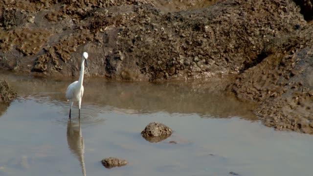 White heron Close up shot of a white heron water bird stock videos & royalty-free footage