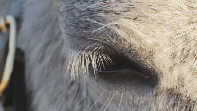 a white horse breathing smoke through his nose on a cold winter day. - grzywa filmów i materiałów b-roll
