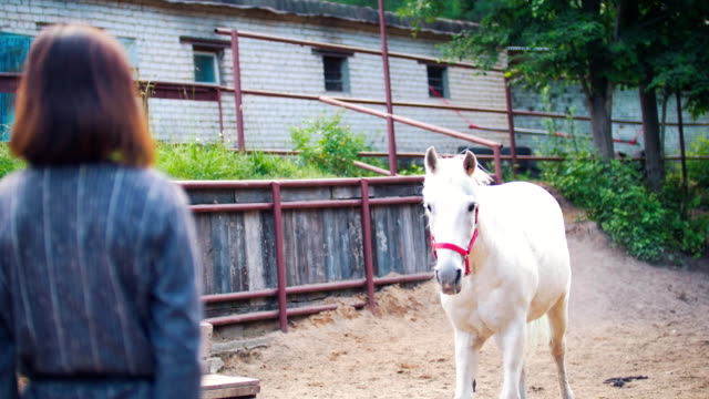 White horse comes to the woman who strokes it White horse comes to the woman who strokes it in the corral, close up animal markings stock videos & royalty-free footage