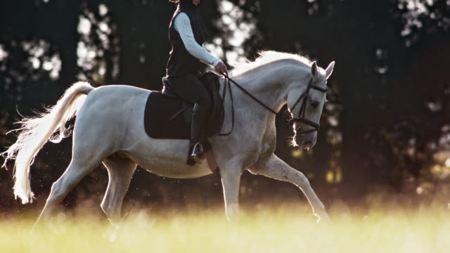 SLO MO TS White horse galloping with female rider