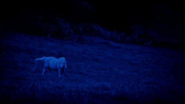 vídeos de stock, filmes e b-roll de cavalo branco pastando a noite - unicórnio
