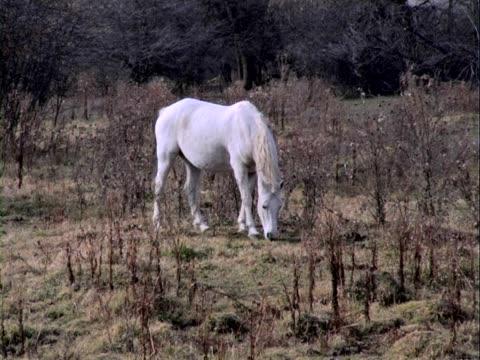 ホワイトホーストレーダー - 動物の行動点の映像素材/bロール