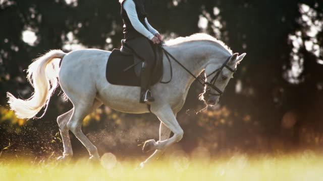slo mo ts white horse in canter with female rider - attività equestre ricreativa video stock e b–roll
