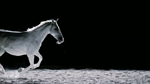 SLO MO LD White horse in gallop at night Slow motion wide locked down shot of a white horse galloping at night in the longe with sand particles flying into the air on black background. fantasy stock videos & royalty-free footage