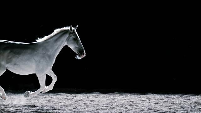 vídeos de stock, filmes e b-roll de slo mo ld cavalo branco em galope à noite - contrastes
