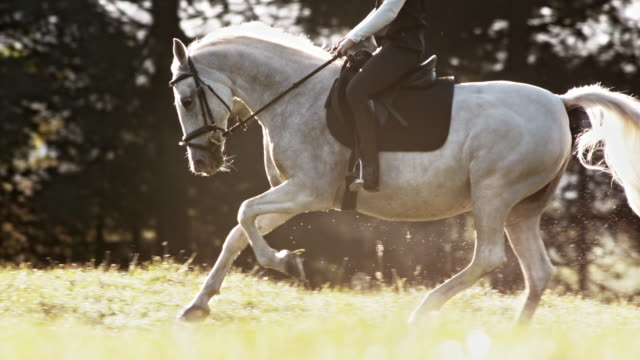 SLO MO TS White horse in gallop with female rider Slow motion medium tracking shot of a horse galloping across meadow with female rider. saddle stock videos & royalty-free footage