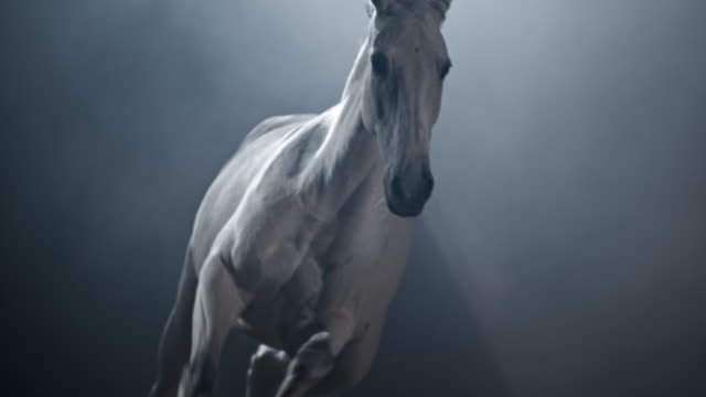 SLO MO DS White horse running in the arena at night