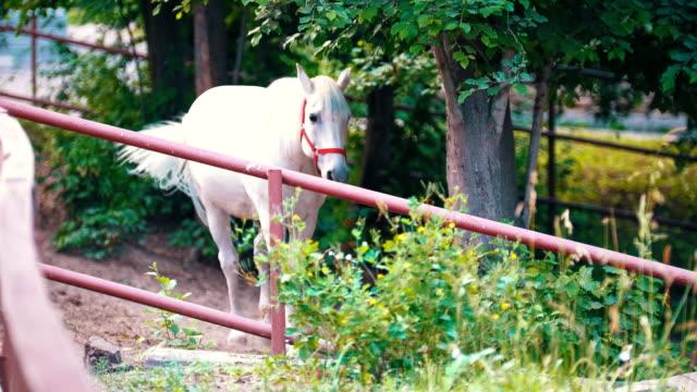 stockvideo's en b-roll-footage met white horse staande in de pen onder de boom - vachtpatroon