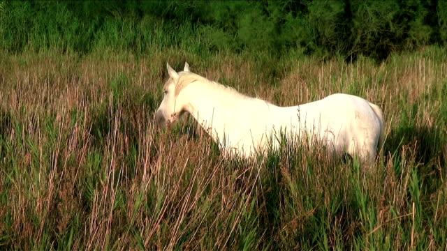 Cavalo Branco - vídeo