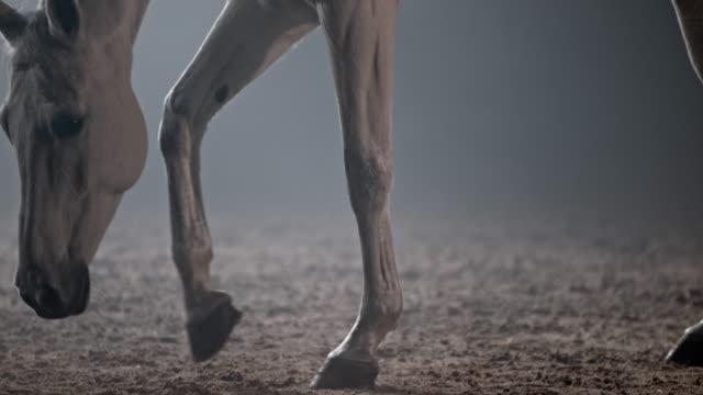 slo mo vit häst som går med huvudet neråt - racehorse track bildbanksvideor och videomaterial från bakom kulisserna