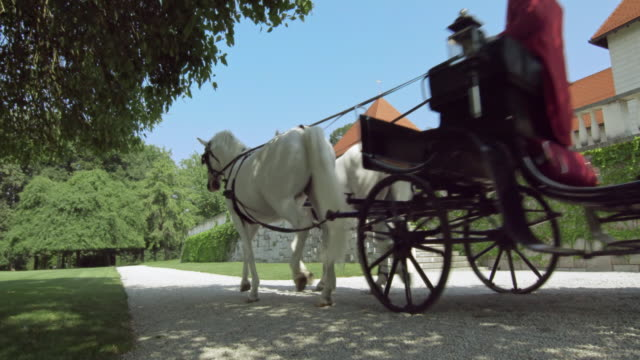 DS White horses pulling a carriage along castle