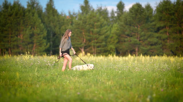 white labrador is walking on a leash with young slim owner near forest in sunny weather in summer day video