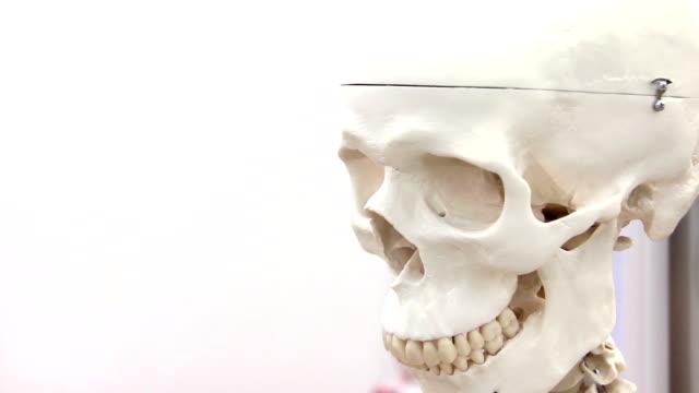 White medical skull video