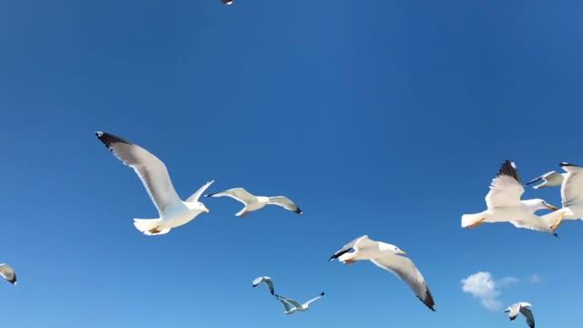 白い地中海のカモメが飛んで - 鳥点の映像素材/bロール