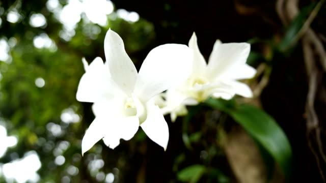 vídeos de stock e filmes b-roll de white orchid flower. - flower white background