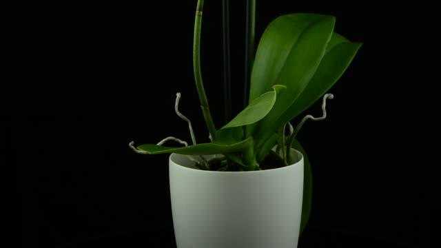weiße orchidee - orchidee stock-videos und b-roll-filmmaterial