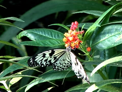pal: papier biały latawiec motyl - część ciała zwierzęcia filmów i materiałów b-roll