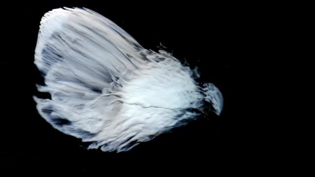 White Phoenix video