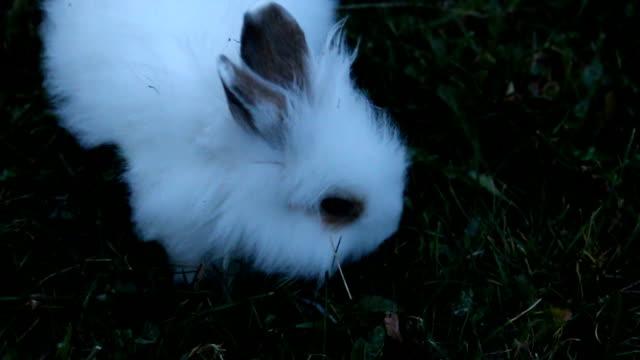beyaz tavşan yakın çekim - kabarık stok videoları ve detay görüntü çekimi