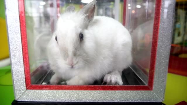 vidéos et rushes de lapin blanc. lapin dans la boîte à astuces - apprivoisé