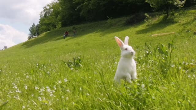 Best Bunny Stock Videos and Royalty-Free Footage - iStock