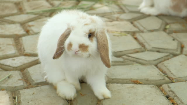 white rabbits eating a leaf together in the graden video