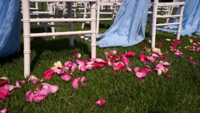 White rose petals for wedding ceremony in the open countryside , in nature , summer , warm weather video