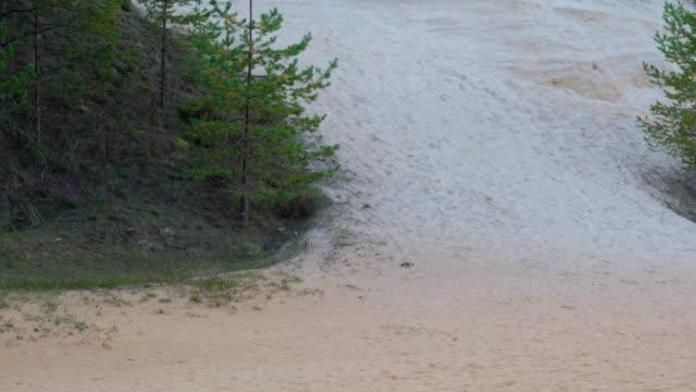 vit sand från skogen i piusa skog - fur bildbanksvideor och videomaterial från bakom kulisserna