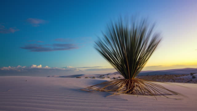 White Sands Time Lapse Cactus Move Right video
