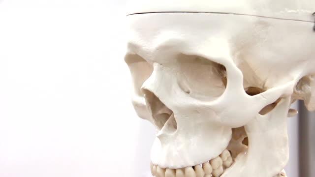 White skull video