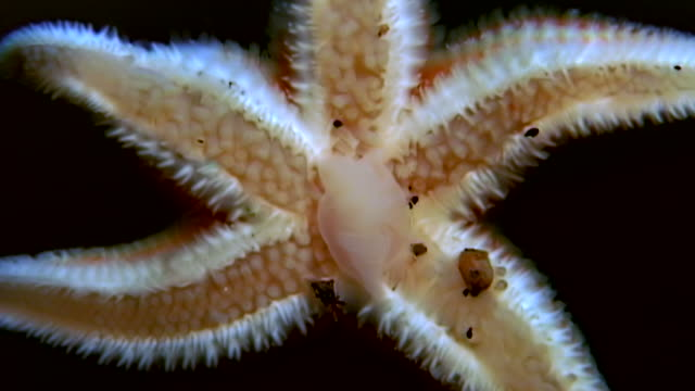 white starfish close up on black background underwater of sea. - immerse in the stars video stock e b–roll