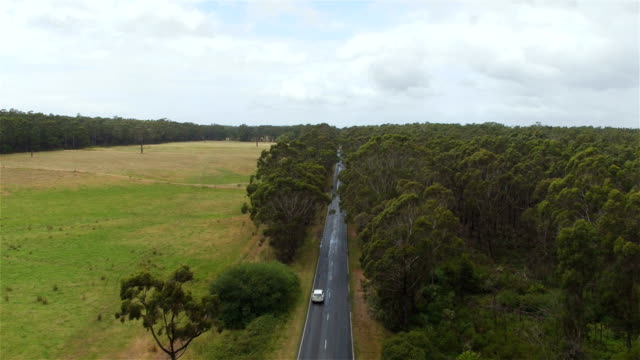 AERIAL: White SUV car driving across the road in wild lush eucalyptus forest video