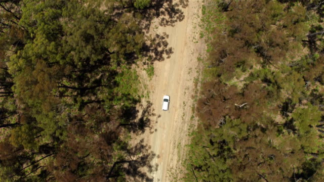 AERIAL: White SUV car driving along straight wide countryside road in forest video