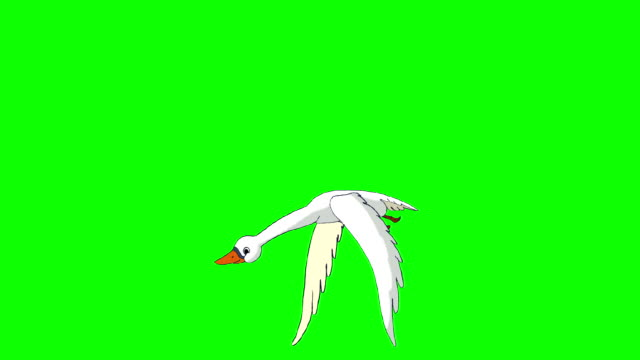 White Swan Flies  Chroma Key White Swan Flies. Animated Looped Motion Graphic Isolated on Green Screen animal wing stock videos & royalty-free footage
