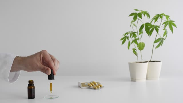 White table with Marijuana plant in pottery. Hand dropping CBD oil from pipette to the watch glass.