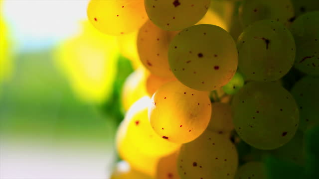 HD White Wine Grapes Macro (Loopable) video