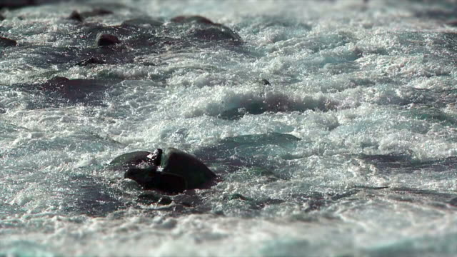 HD Whitewater river in the Sunlight (Loopable) Loopable shot of a whitewater river in the sunlight. wasser videos stock videos & royalty-free footage