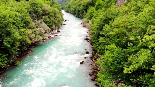 whitewater tara river - дикая растительность стоковые видео и кадры b-roll