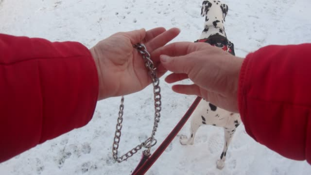 Who Let the Dogs Out? A point of view shot from a wearable camera of a woman letting two dogs off their leash in a snowy garden on a winter's day in England. leash stock videos & royalty-free footage