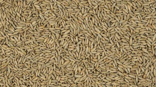 vidéos et rushes de fond de grain de seigle entier, texture. rotation et zoom arrière de l'arrière-plan du grain. - seigle grain